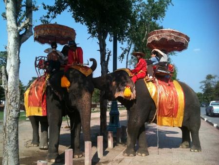 アユタヤで見た象