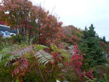 海岸沿いの紅葉(アカディア国立公園)