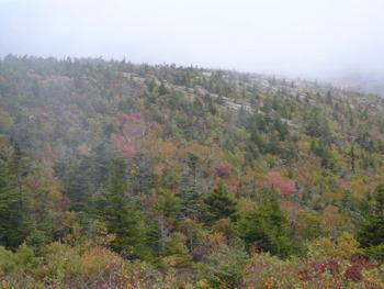 キャデラック・マウンテンの紅葉(アカディア国立公園)