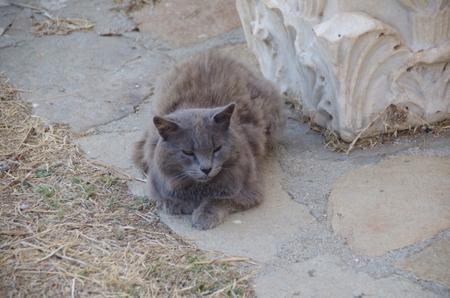 デロス島の猫たち (2).JPG