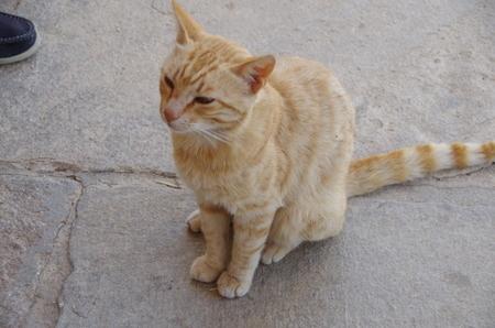 デロス島の猫たち (3).JPG
