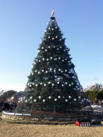 ナショナル・クリスマスツリー