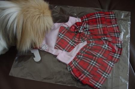 明洞の露店で買ったバーバリー風犬服 (2).JPG