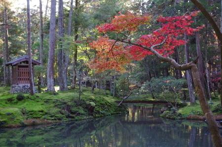 紅葉の西芳寺 (1).JPG